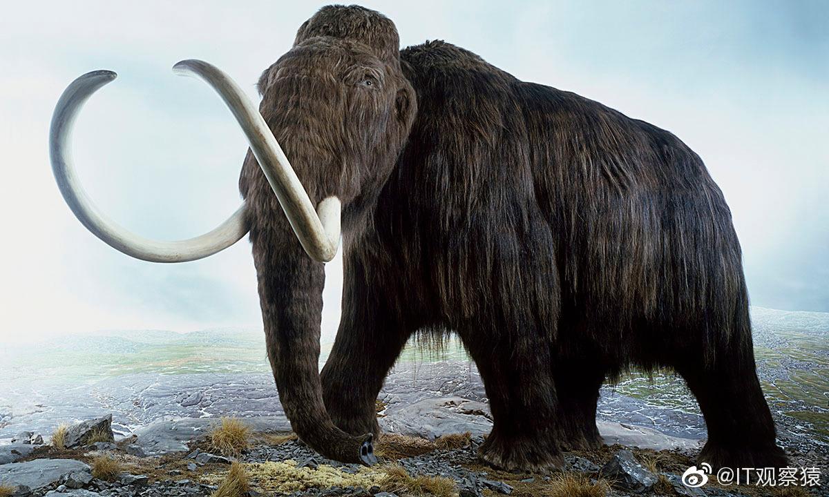 一家生物科技宣称要复活真猛犸象-PK技术网